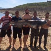 Билећанин уловио сома тешког 85 килограма и дугог 2,4 метра