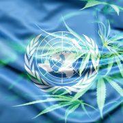Историјски дан. Након 60 година Уједињене нације скинуле канабис са листе опојних дрога