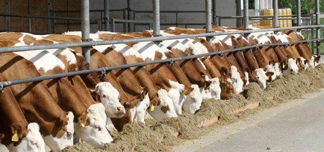 Почеле припреме за попис пољопривреде, ратари скептични